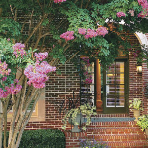 southern living crepe myrtle articles