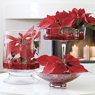 Centerpiece Poinsettias Show Off Your