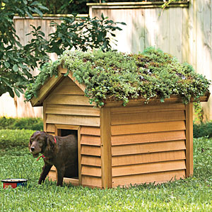 Cool Digs For Your Dog Southern Living