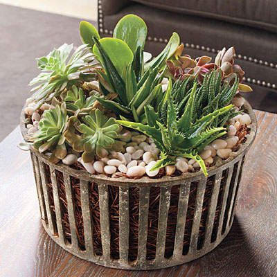Best indoor houseplants succulents best indoor houseplants southern living - Best indoor succulents ...