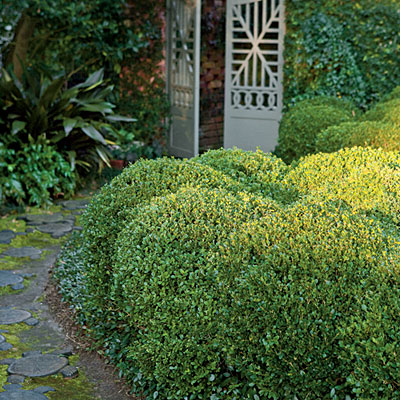 Landscaping with boxwoods southern living