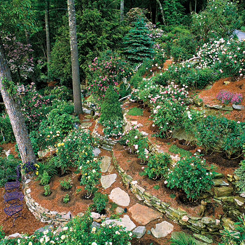 20 Sloped Backyard Design Ideas: Grow Roses With Ease