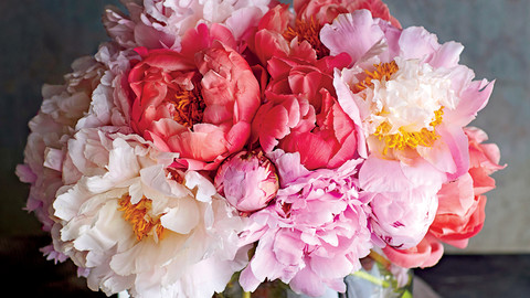 5 Things You Need to Know If You Want to Grow Your Own Peonies