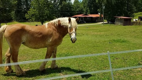 Chattanooga's Most Famous Horse Junebug,  Has Died
