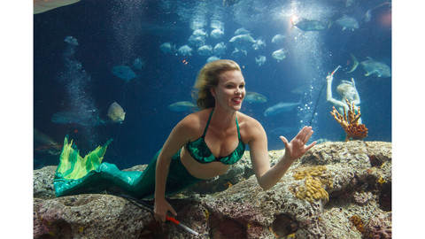 Florida's Famous Weeki Wachee Springs Mermaids Are Coming to the South Carolina Aquarium