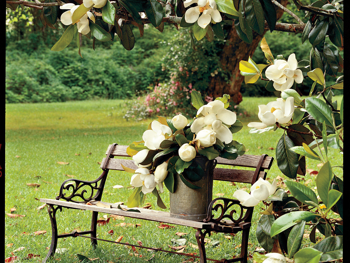 The complete guide to magnolia trees southern living for Gartendeko ausgefallen
