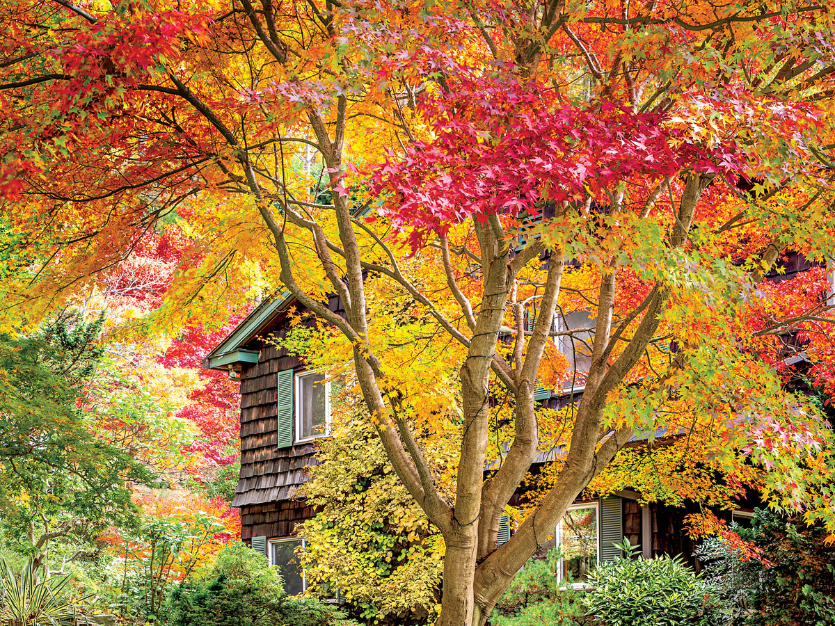 Maple Acer Southern Living