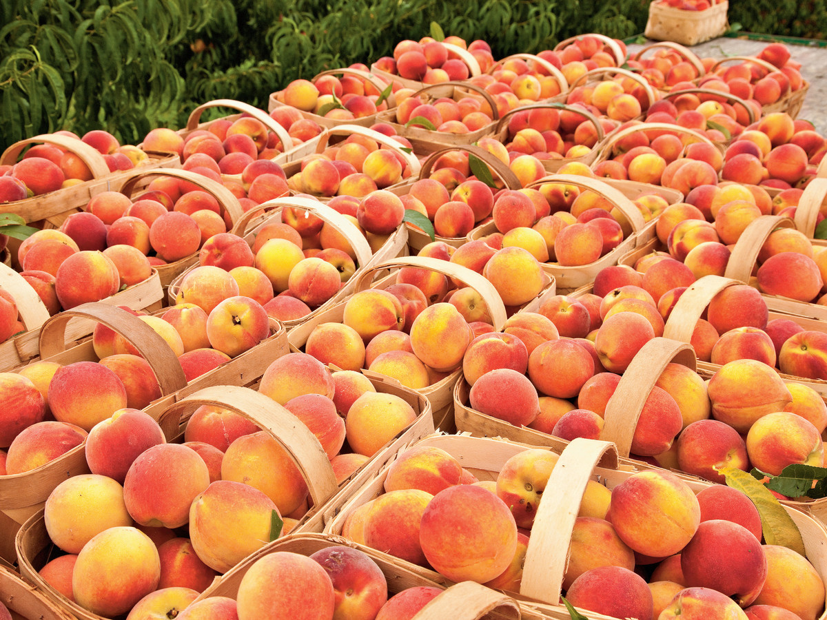 Peaches in Crates