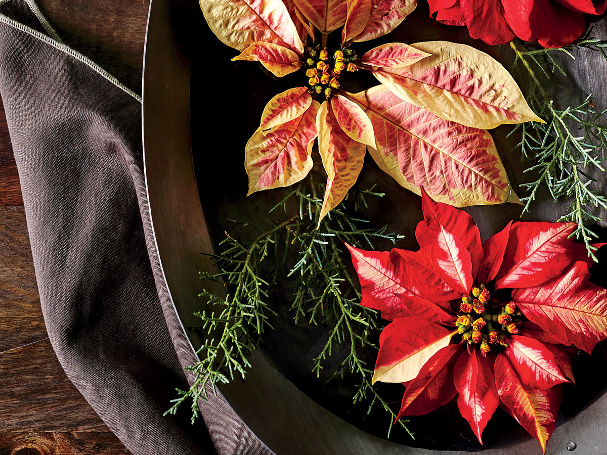 How To Care For Poinsettias All Year Long Southern Living
