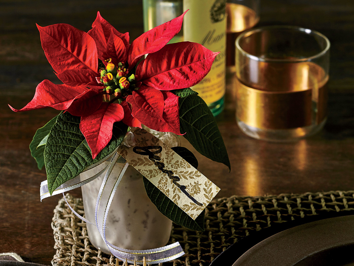 How To Care For Poinsettias This Christmas Southern Living