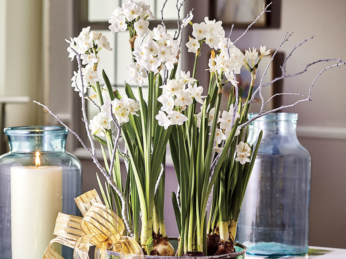How to grow paperwhite bulbs southern living blooming paperwhites mightylinksfo