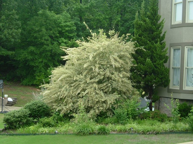 Five Awful Plants for the Front of Your House