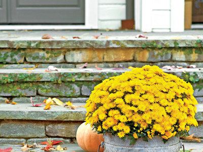 Fall Outdoor Display with Mums and Pumpkins