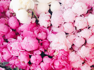 Peony Facts grow in South