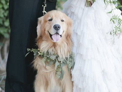 The Top Wedding Trends for 2017 Puppies