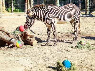 Easter Zoo Animals