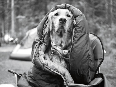 Dog Wrapped in Sleeping Bag Camping