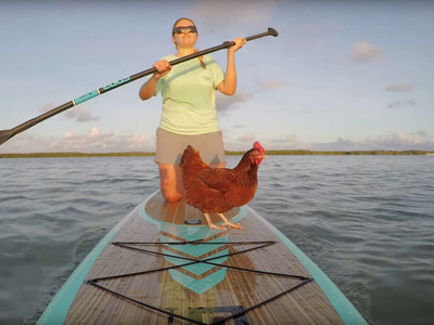 Loretta Paddleboarding Chicken