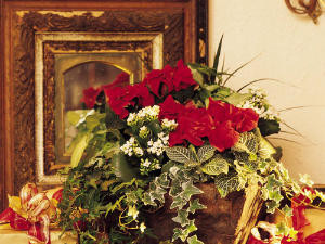 Easy Ways with Poinsettias