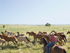 Texas Road Trip Photos: Horses