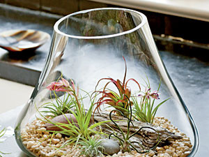 No-Soil Terrarium