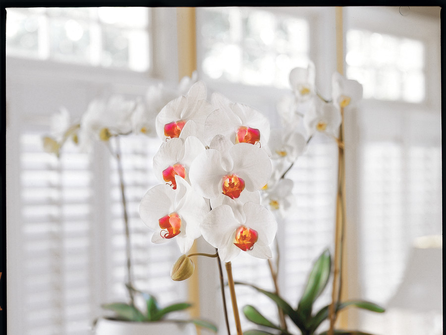 Our Favorite Orchid