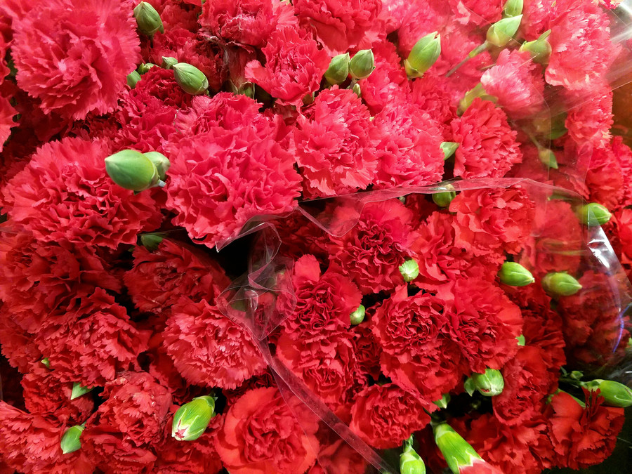 Mother's Day Red Carnations