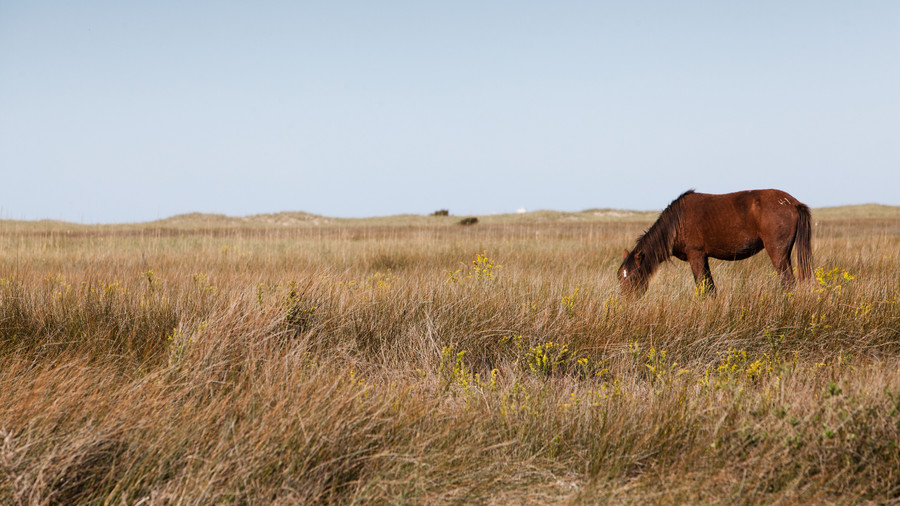 Shackleford Banks (North Carolina)