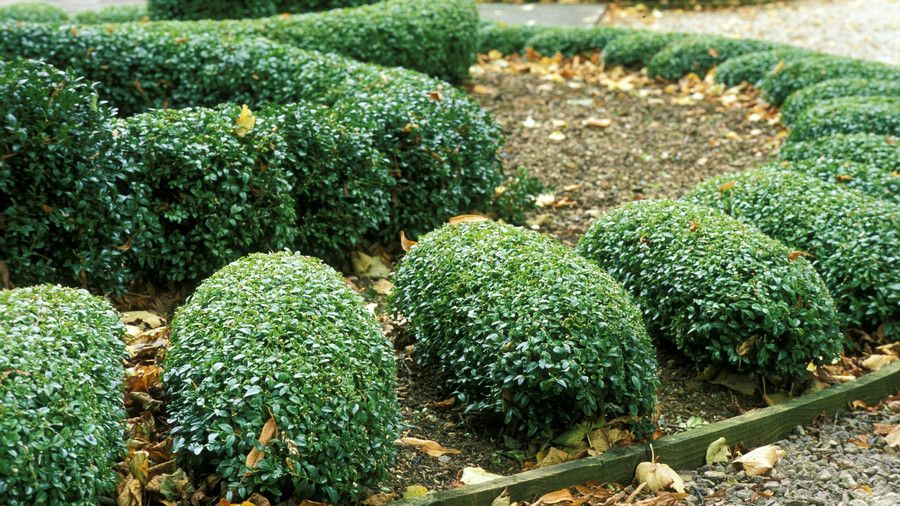 11 Common Plants You Should Never (Ever!) Bring Home from the Nursery Again