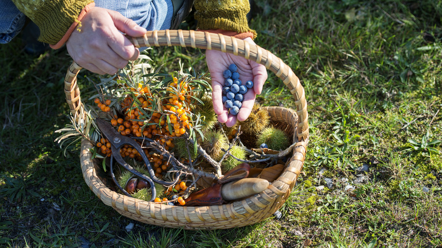 Foraged Food