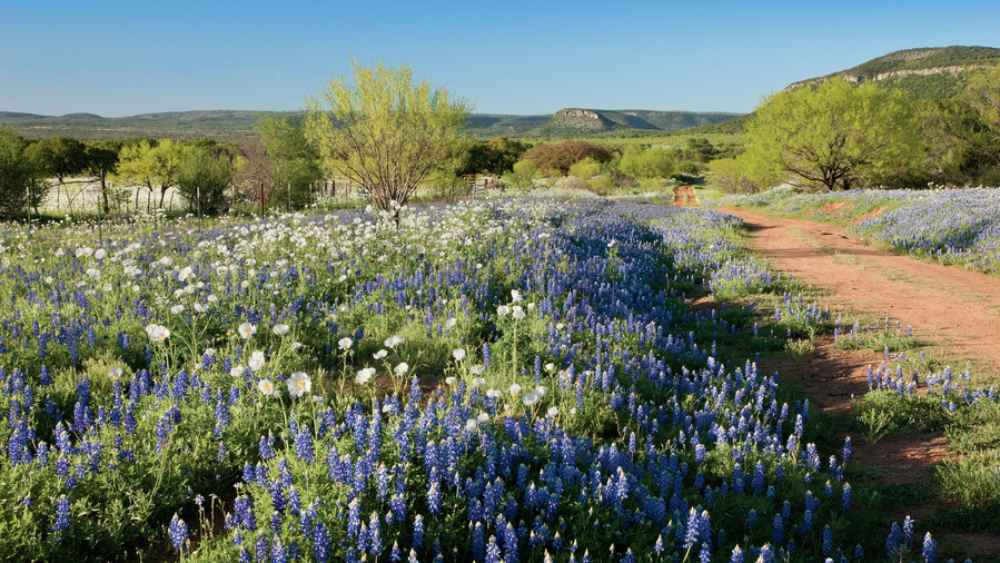 11. Swim in Texas Bluebonnets