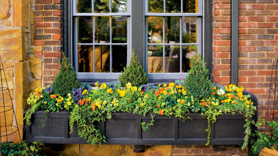 Show-Stopping Autumn Window Box