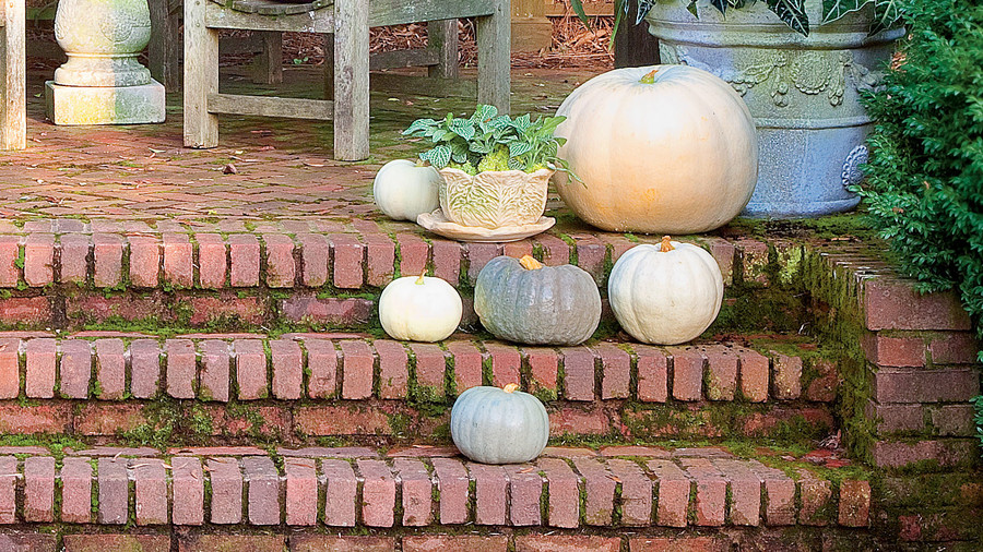 Arrange White Pumpkins