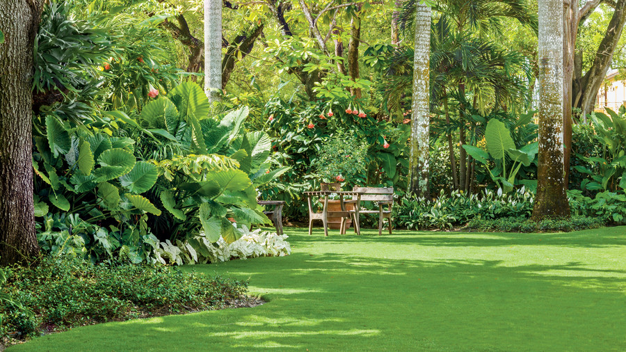 Spacious Tropical Lawn
