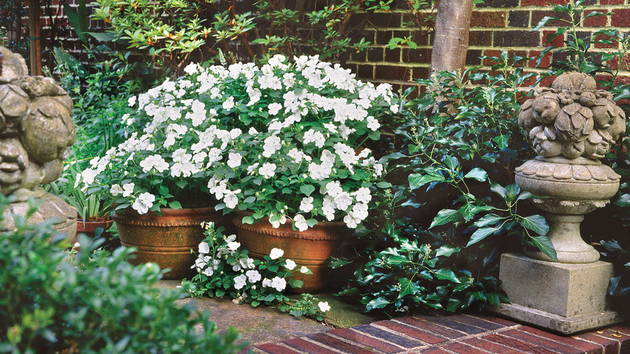 Spectacular container gardening ideas southern living white impatiens mightylinksfo