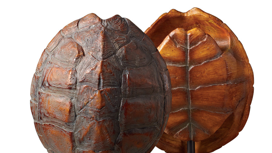 Tortoise Shell Natural Pair