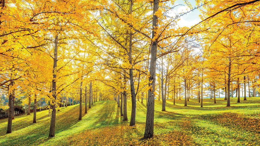 The Souths Best Fall Colors Southern Living - 8 best places in the us to watch fall foliage