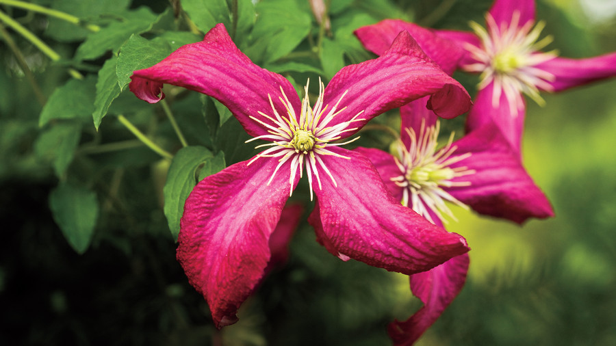 Flower Plants: More of Lyndy's Tips