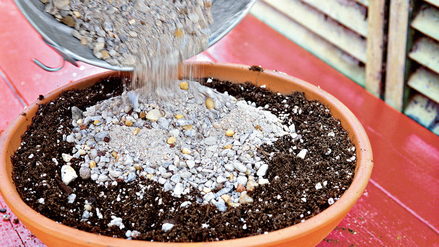 Planting Succulent Containers: Step One