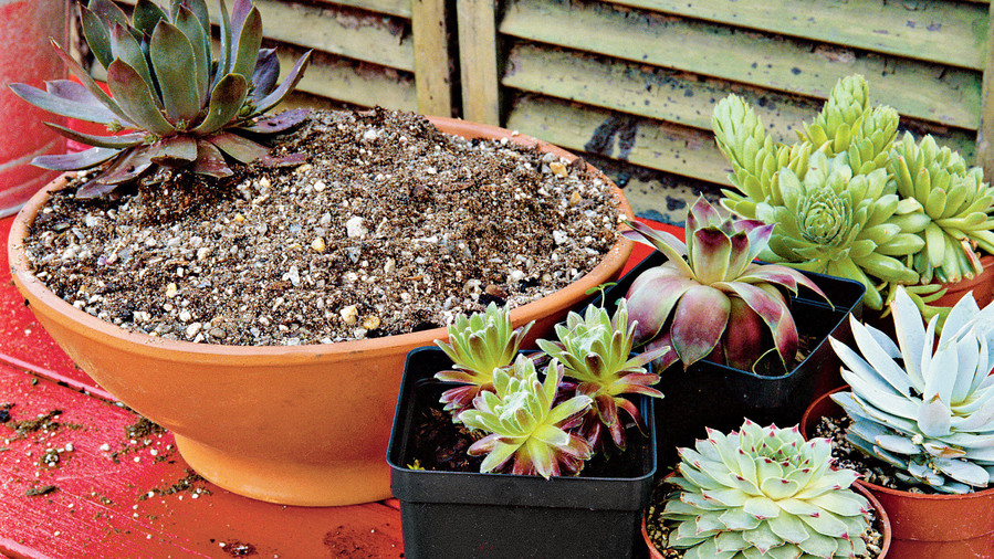 How to plant succulents in containers southern living planting succulent containers step three workwithnaturefo