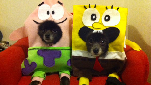 Spongebob Squarepants & Patrick Dog Costume