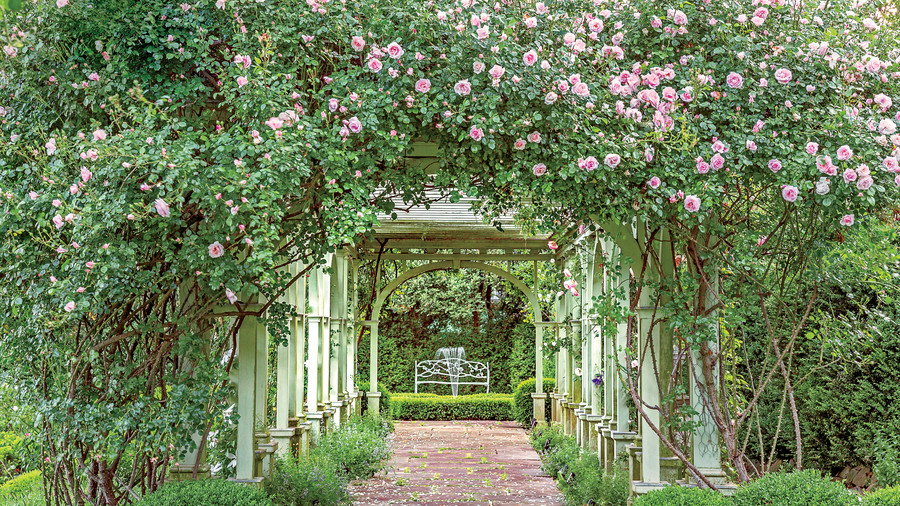 Rose-Covered Pergolas