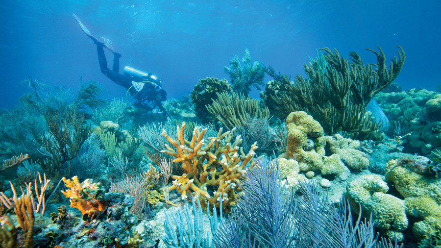 Perfection Reef in Dry Tortugas National Park