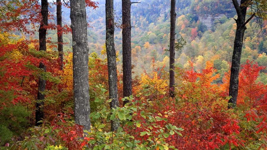 Red River Gorge Fall Color
