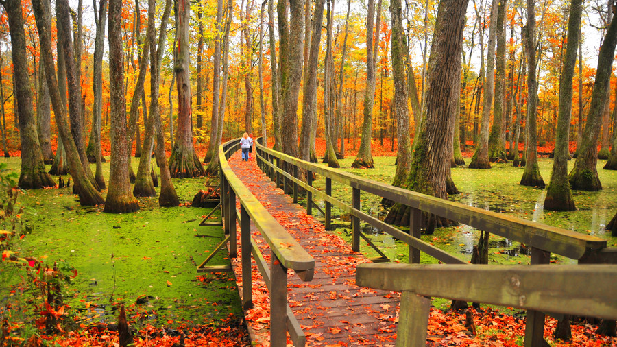 Cypress Swamp on the Natchez Trace Parkway Fall Color