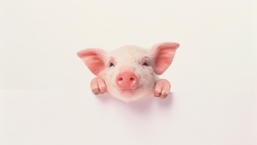 pink pig with smiling face