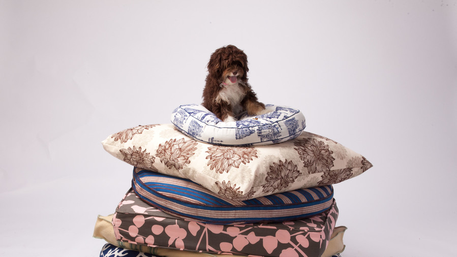 puppy on stack of dog beds