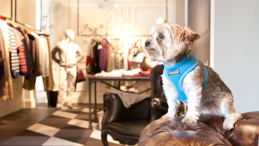Terrior dog in clothing store