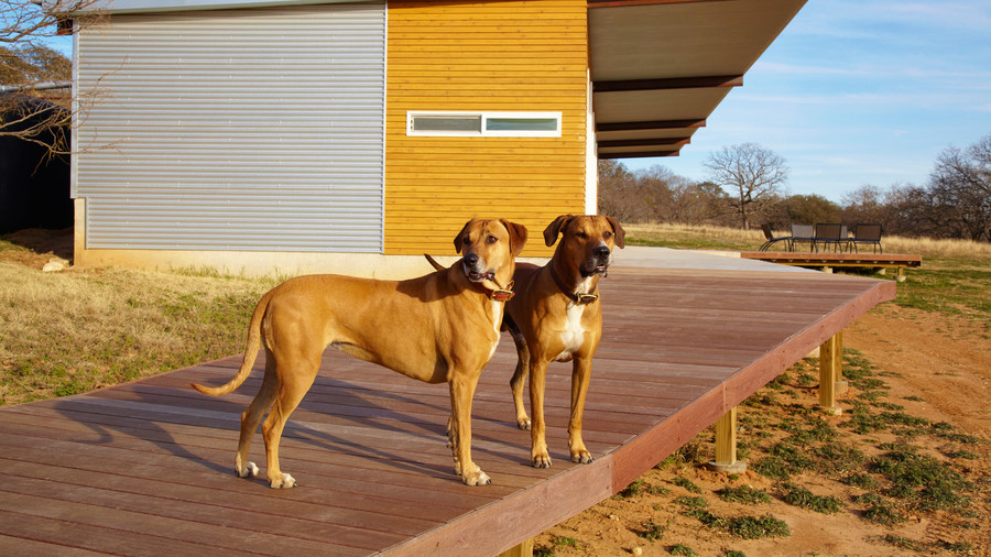 two dogs standing on deck.