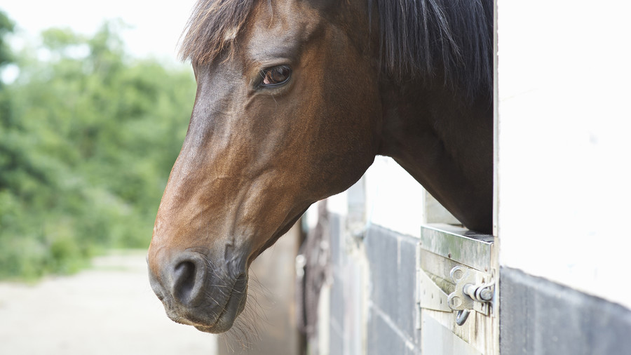 brown horse in stall